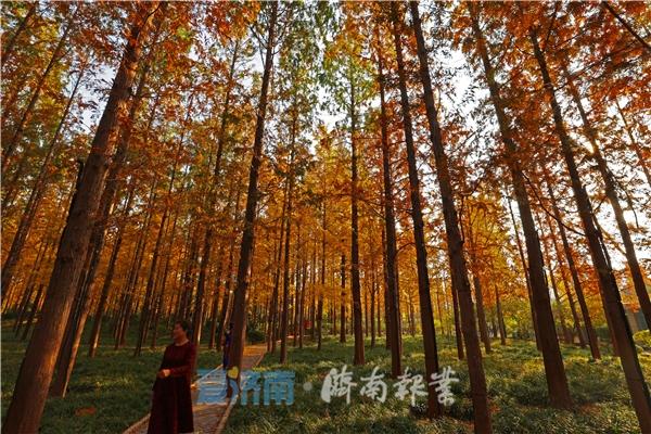 """济南拟打造黄河流域""""绿廊、绿网、绿芯""""扩建趵突泉、五龙潭公园"""