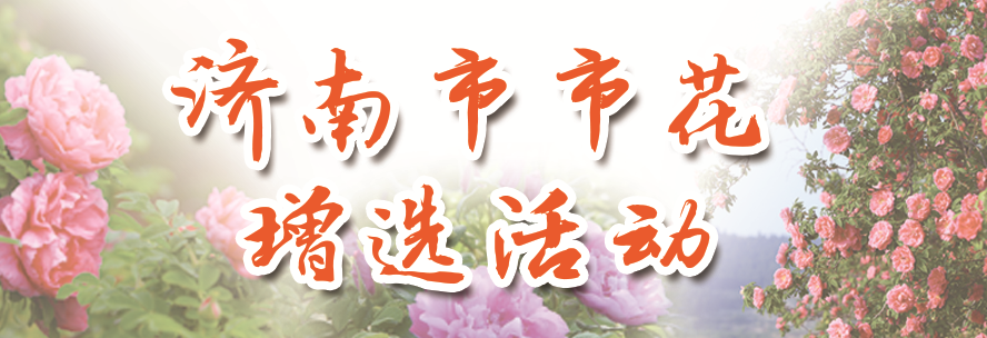 【济南市市花增选活动】济南最受欢迎浪漫伴手礼免费送!快到济南发布为增选市花投票