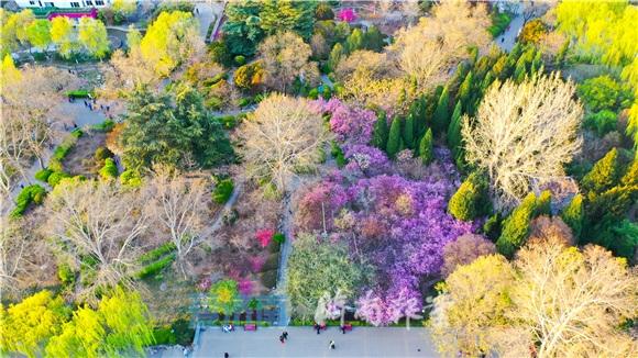 春风拂垂柳,百花齐盛开!带你走进百花公园深处