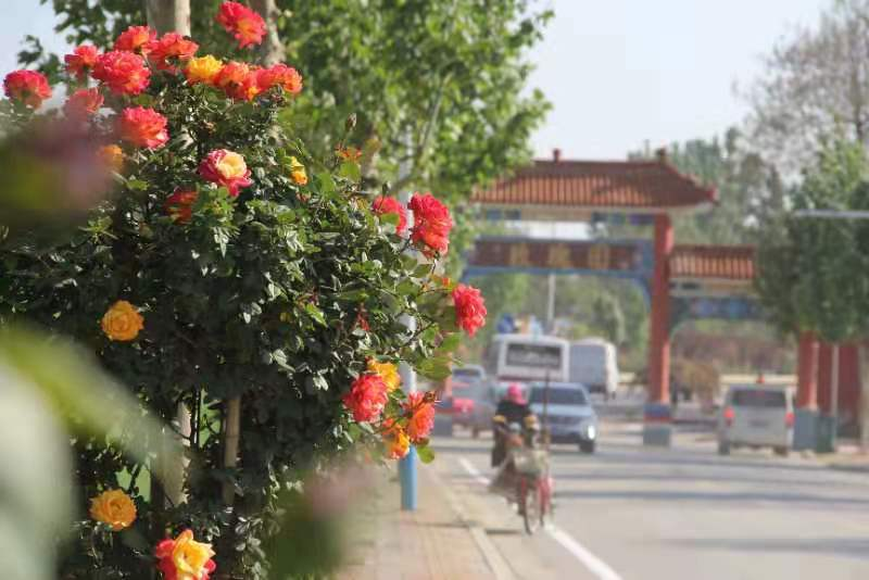 到这里找寻浪漫 玫瑰风情小镇获评首批山东省精品文旅小镇