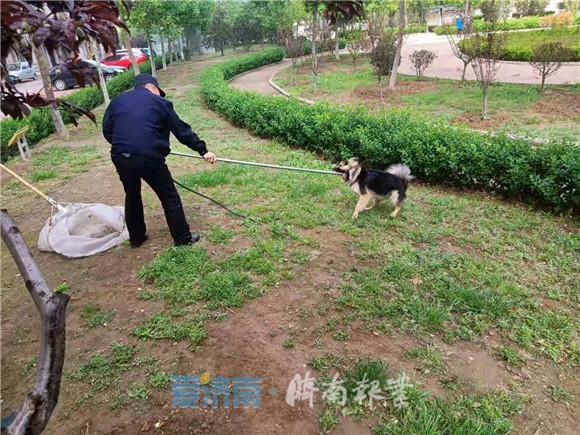 新规下月即将实施,济南文明养犬现状如何?